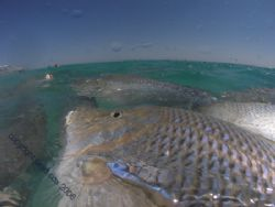 Snapper at Coral Bay Western Australia, this is only 10 m... by Brad Cox 